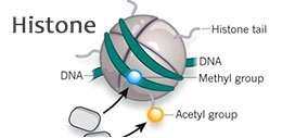 Epigenetic Antibodies